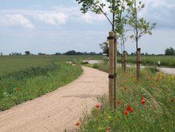Radweg Fehmarn